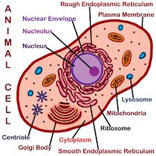 Cell Ka Samanya Parichay कोशिका का सामान्य परिचय